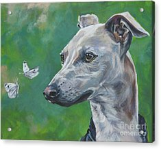 Italian Greyhound With Cabbage White Butterflies Acrylic Print by Lee Ann Shepard