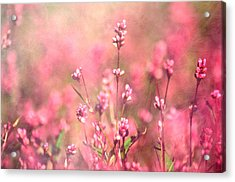 It's A Sweet Sweet Life Acrylic Print
