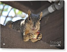It's My Fig Acrylic Print by Johanne Peale