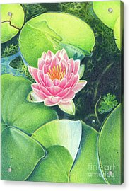 Its Pink Acrylic Print by Elizabeth Dobbs