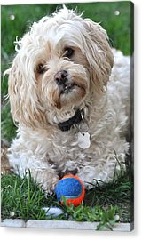 It's Time To Play Acrylic Print by Lisa  DiFruscio