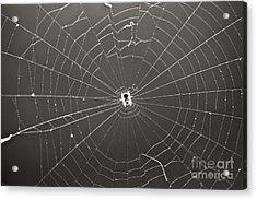 Itsy Bitsy Spider Acrylic Print by Leslie Leda