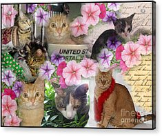Itty Bitty Kitties Acrylic Print