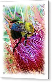 I've Fallen Into A Thistle And I Can't Get Out Acrylic Print by Judi Bagwell