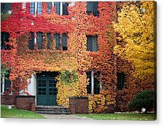 Ivy League Acrylic Print by Penny Hunt