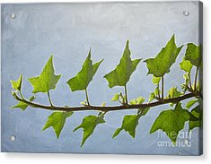 Ivy To The Left Acrylic Print