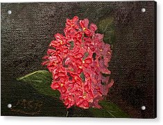 Ixora Bloom Acrylic Print by Maria Soto Robbins