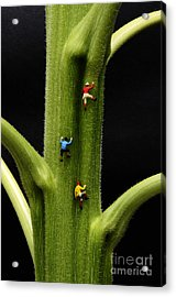 Jack And His Friends Climb The Beanstalk Acrylic Print by Bob Christopher