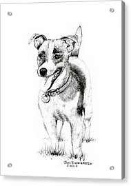 Acrylic Print featuring the drawing Jack Russell Terrier by Jim Hubbard