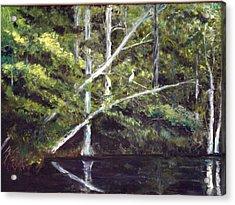 Jackson Bluff On The Waccamaw River Acrylic Print by Phil Burton