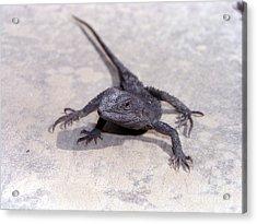 Jacky Lizard  Acrylic Print by Joanne Kocwin