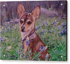 Jacob  In Bluebonnets Acrylic Print by Maureen Pisano