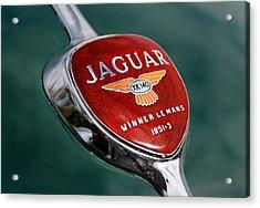 Jaguar Winner Le Mans Acrylic Print by Kristan Barnes