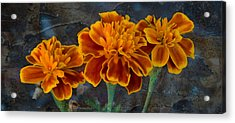 Janet's Marigolds Acrylic Print by Lisa Moore