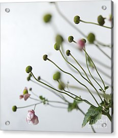 Japanese Anemones Acrylic Print by Ruby Hummersmith