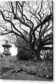 Japanese Lantern And Tree - Liliuokalani Park - Hilo Hawaii Acrylic Print
