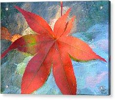 Japanese Maple Acrylic Print by Beth Akerman