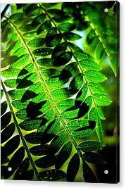Jaqaranda Branches Acrylic Print by Catherine Natalia  Roche