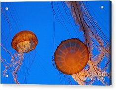 Jellies Acrylic Print by Tap On Photo