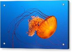 Jellyfish Acrylic Print by Viviana Singh