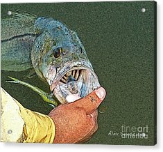 Jerkbait Snook Acrylic Print by Alex Suescun
