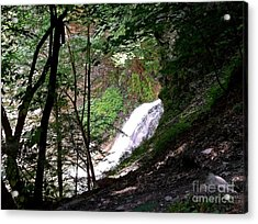 Acrylic Print featuring the photograph Jewell Of The Forest by Christian Mattison
