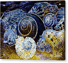 Abstract Seashell Art Acrylic Print