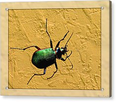 Acrylic Print featuring the photograph Jeweltone Beetle by Debbie Portwood