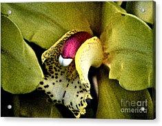 Jimenez Orchid Acrylic Print by Gwyn Newcombe