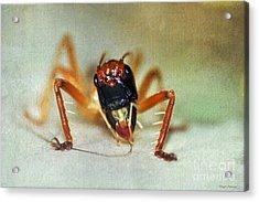 Jiminy Cricket 2 Acrylic Print