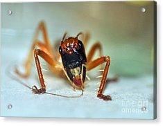 Jiminy Cricket Acrylic Print