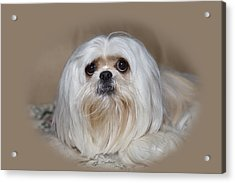 Joliedog5vigbeige Acrylic Print by Cecil Fuselier