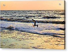 Jonathan Livingston Seagull Acrylic Print by Kristin Elmquist