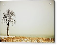 Jordan, Ontario, Canada A Tree Along Acrylic Print by Pete Stec