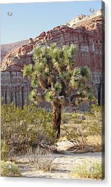 Joshua And Red Rock Acrylic Print