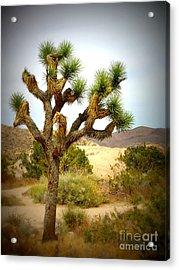 Acrylic Print featuring the photograph Joshua Tree by Jim McCain