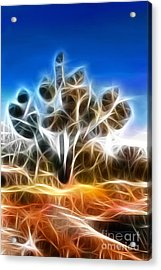 Joshua Tree Acrylic Print by Methune Hively