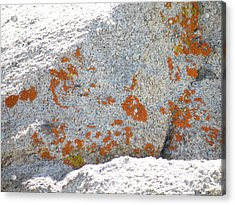 Joshua Tree Orange Lichen Acrylic Print by Claire Plowman