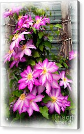 Acrylic Print featuring the painting Joy Clematis by Susan Fisher