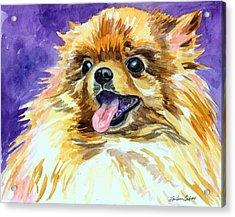 Joyous Soul - Pomeranian Acrylic Print
