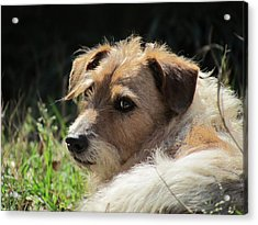 JRT Acrylic Print by Ginger Adams