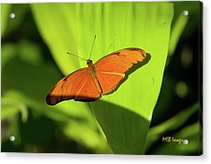 Acrylic Print featuring the photograph Julia Butterfly by Margaret Buchanan