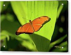 Julia Butterfly Acrylic Print by Margaret Buchanan