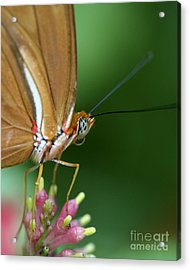 Julia Butterfly Acrylic Print by Pamela Gail Torres