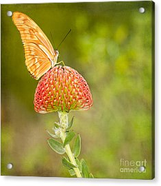 Julia Longwing Butterfly On Exotic Flower Acrylic Print