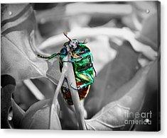 Junebug Acrylic Print by Mariola Bitner