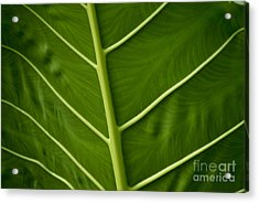 Jungle Leaf Acrylic Print