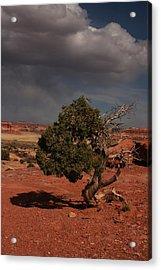 Juniper Canyonlands National Park Acrylic Print