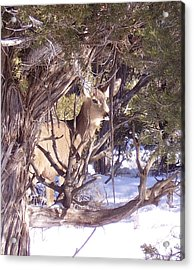 Juniper Deer Acrylic Print by FeVa  Fotos