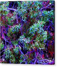 Acrylic Print featuring the photograph Juniper Neurons by Ann Johndro-Collins